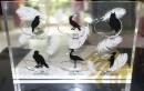 Heimische Vögel Acrylbox für 20 EURO...